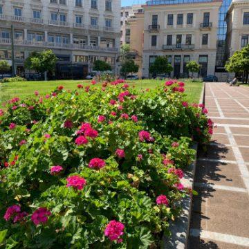 «Άνθισε» η Αθήνα- 8.500 νέα φυτά σε διάφορα σημεία της πόλης, από τις αρχές Μαρτίου